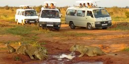 New Kenya Tour Safari