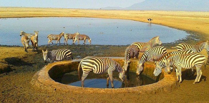 Tsavo East Salt Lick